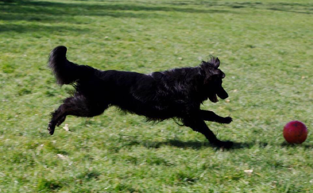 a dog chasing after a ball